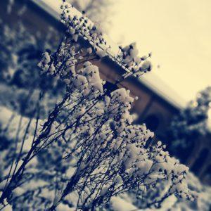 Krematorium Bern Snow