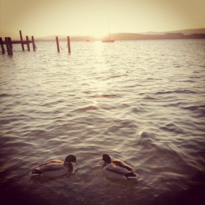 03.20.20 Lac de Morat